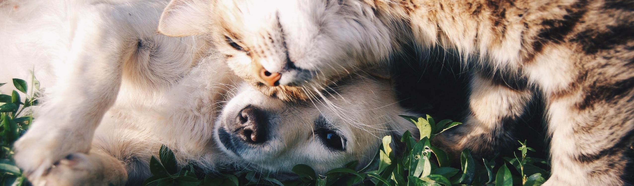 Pets_Gourmet_TOP